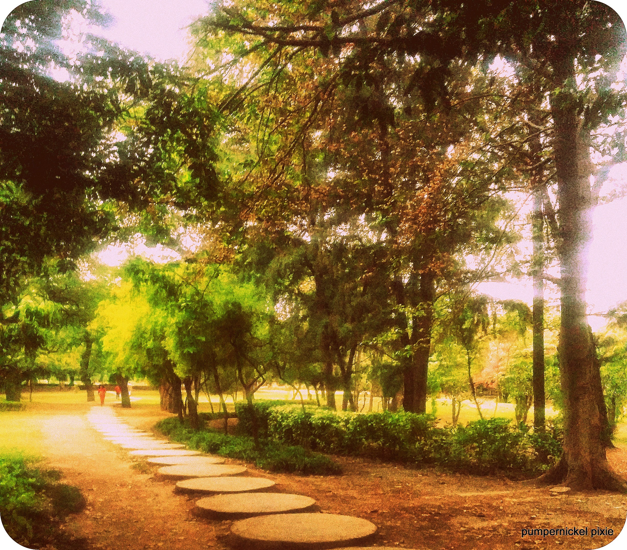 morning walk green trees garden park photography on pumpernickel pixie