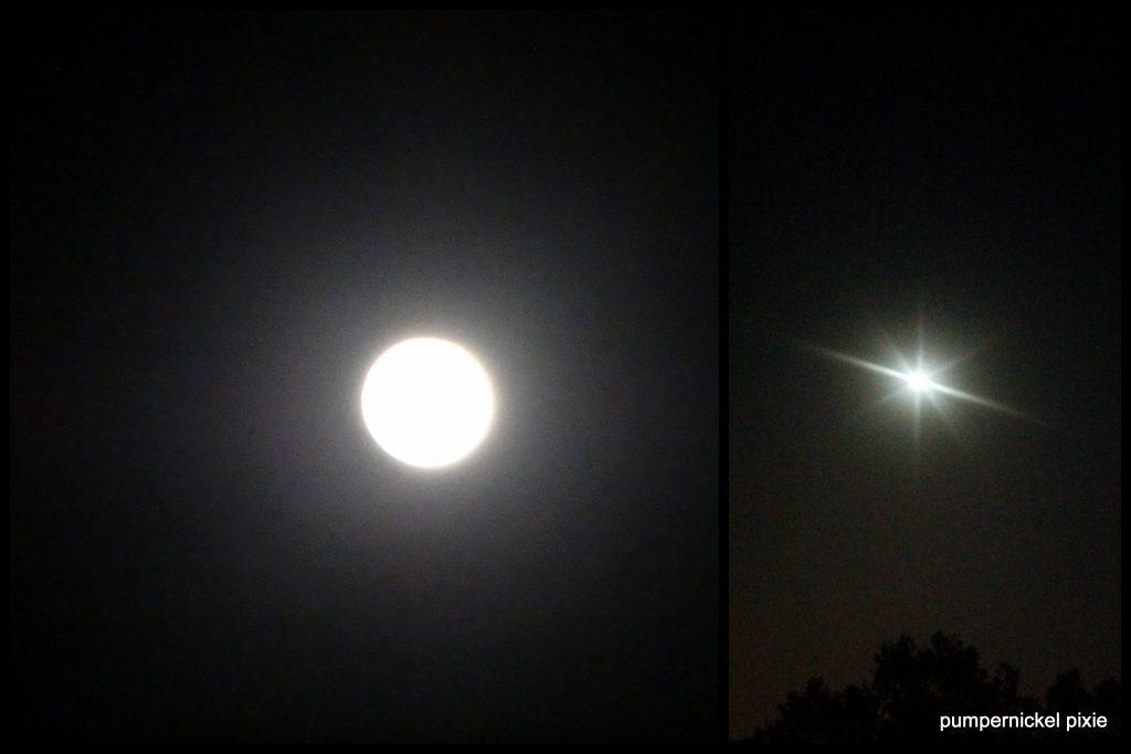 moon gazing full moon fever moonlit night moonlight full moon march moon pumpernickel pixie