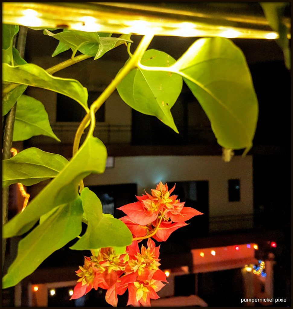 love and light, nature, flowers, light, night photography, bougainvillea, photo a week, photography, pumpernickel pixie